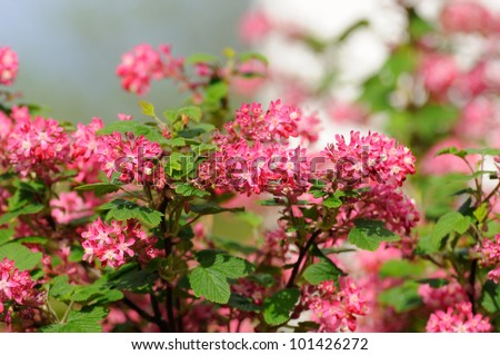 Tree branch small pink flowers fulda stock photo edit now tree branch with small pink flowers in fulda hessen germany mightylinksfo