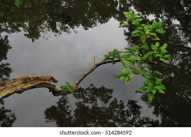 Tree branches above a lake