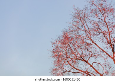 Tree branches against the blue sky. Background, wallpaper.