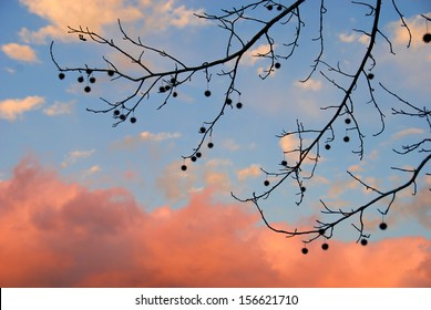 Tree branches against Rosy Sky