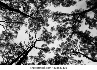 Tree Branches Against Sky Black and White Background