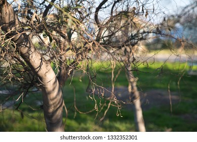 tree and branches of a bizzare shape