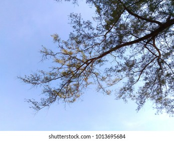 Tree branches with blue sky background