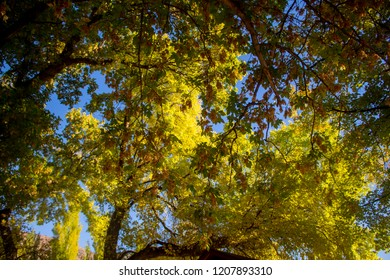 Tree branches with bright green leaves against blue sky on a clear autumn day