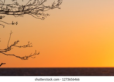 Tree branches by sunset with a lot of copy space