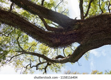 Tree branches in close up in summer