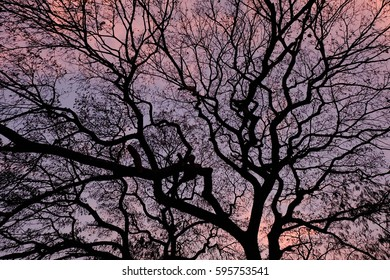 Tree branches and colors of the sunset sky