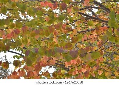 Tree branches covered in multicolored leaves of fall colors, including purple