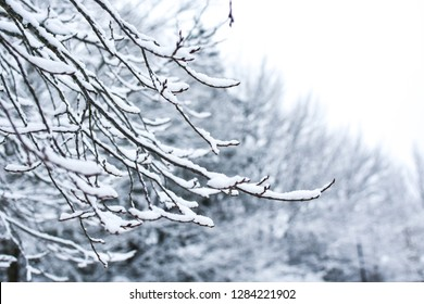 Tree branches covered with snow. Beautiful winter landscape. The Abant Lake Natural Park Karadeniz (Black Sea) Region, BOLU, TURKEY. Winter holidays, Xmas concept.