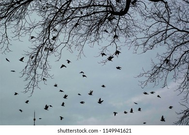 Tree branches and flying birds silhouette at winter in the park