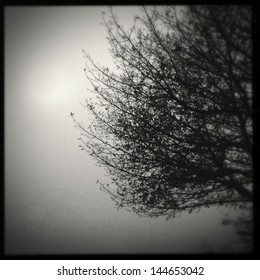 Tree branches in fog. Copy space