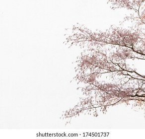 Tree branches in front of bright white background