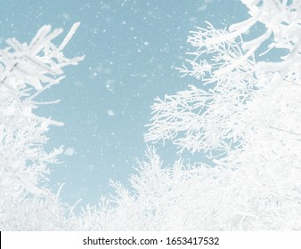 Tree branches in frost and snow on background of blue sky with falling snowflakes. Winter nature landscape.