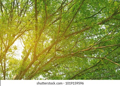 Tree branches in the garden with rays of sunlight.