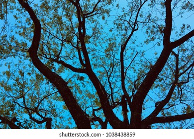 Tree branches with green leaves against a clear blue sky.