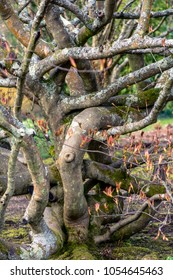 Tree branches intertwining