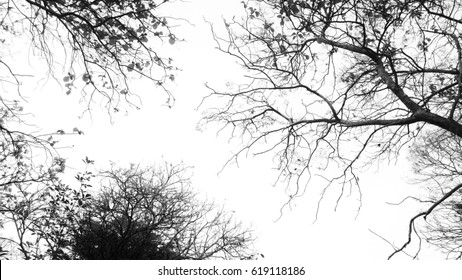 tree  branches isolate on white