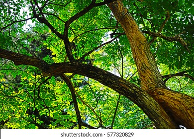 tree branches and leaf