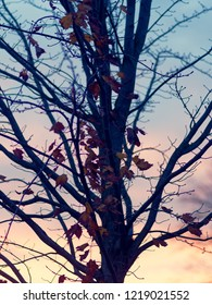 tree branches with leaves at evening
