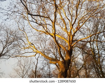 Tree branches lighted up in winter sun rays