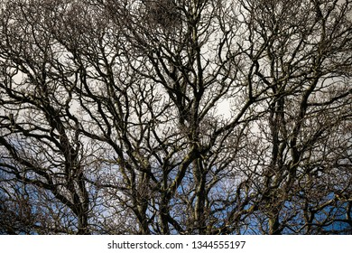 Tree branches with no leaves