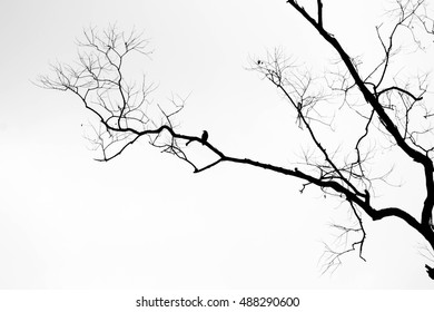 Tree branches no leaves with bird - black and white