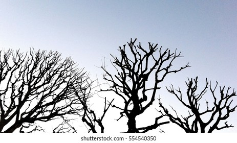 Tree branches on grey sky. Abstract background.