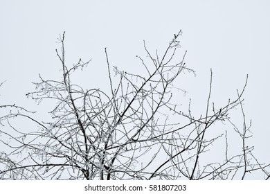 tree branches on the sky background at the winter