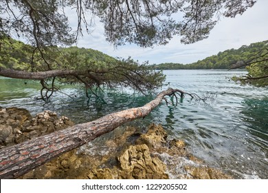 Tree branches on top of green sea and rocks. Mljet National Park, Croatia