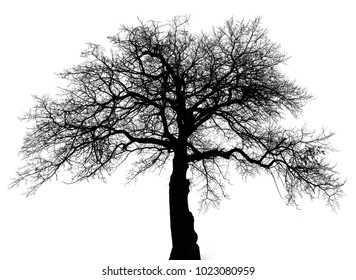 Tree branches on white background, Tree Silhouette Isolated on White