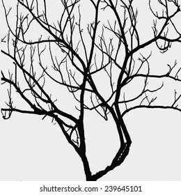 tree branches on white background