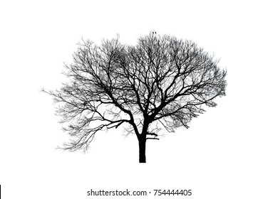 Tree branches on white isolated background