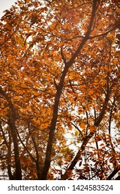 Tree branches with orange leaves around a forest area unique photo