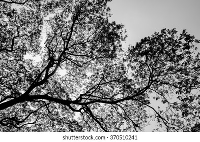 Tree and branches of tree over head. Branch tree texture.