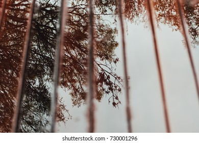 Tree branches reflection in wet wooden boards