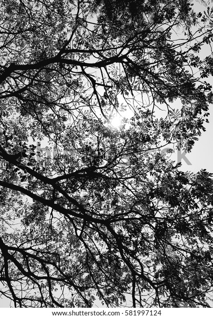 Tree branches a shadow sunlight