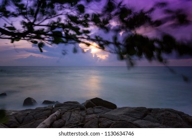 Tree branches in silhouette moving against sunset sky at beautiful seascape, Surin Beach, Phuket, Thailand. Tropical beach paradise holiday, dramatic beach background.