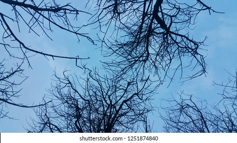 tree branches with silhouette and mystical atmosphere