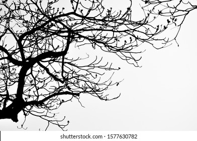 Tree branches silhouette photo took in winter in Hong Kong