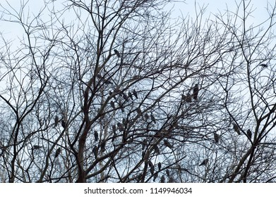 Tree branches and sitting birds silhouette at winter in the park