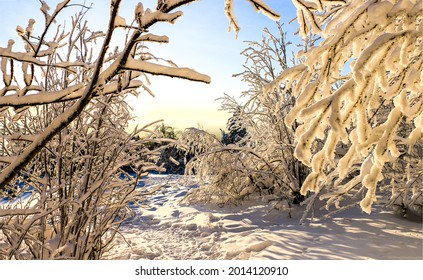 Tree branches in the snow in the winter forest. Winter snow scene. Snow covered branches. Winter snow