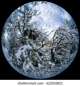 Tree branches under snow photographed with fish-eye