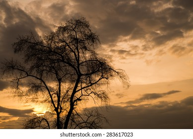 Tree branches under  sunset.
