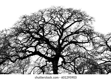 Tree branches in the white background