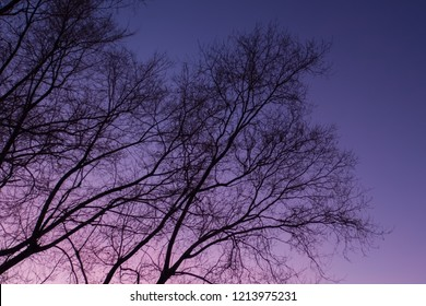 Tree branches in the winter silhouetted by the sky after sunset