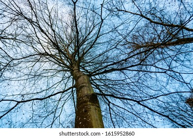 Tree branches without leafs and sky