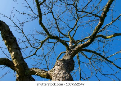 tree and bright blue sky