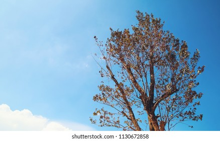 tree with bright sky background in autumn