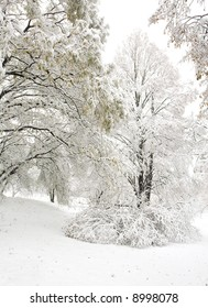 Tree and bush during snowstorm