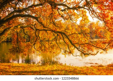 Tree by the lake during autumn in Lednice Park, Czech Republic